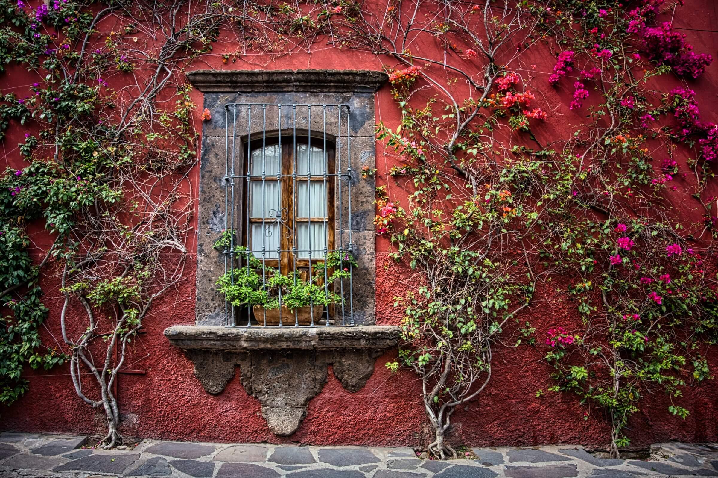 san miguel de allende window with multicolor bougainvillea